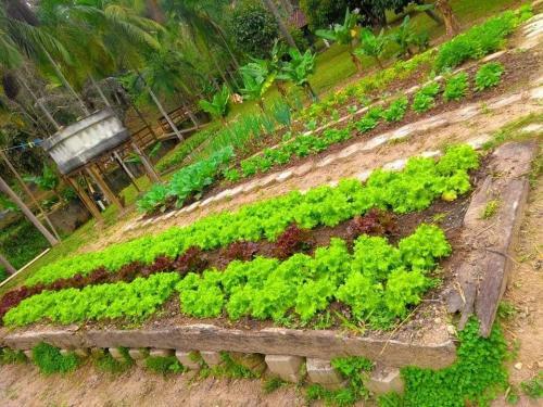 Horta de Verduras